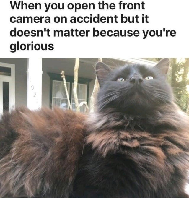 Cat - When you open the front camera on accident but it doesn't matter because you're glorious