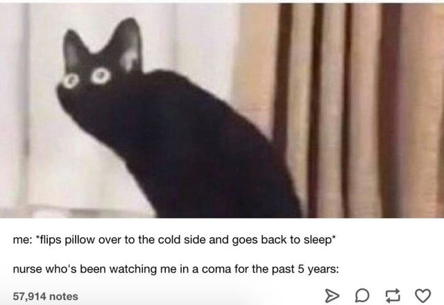 "Cat - me: ""flips pillow over to the cold side and goes back to sleep* nurse who's been watching me in a coma for the past 5 years: 57,914 notes"