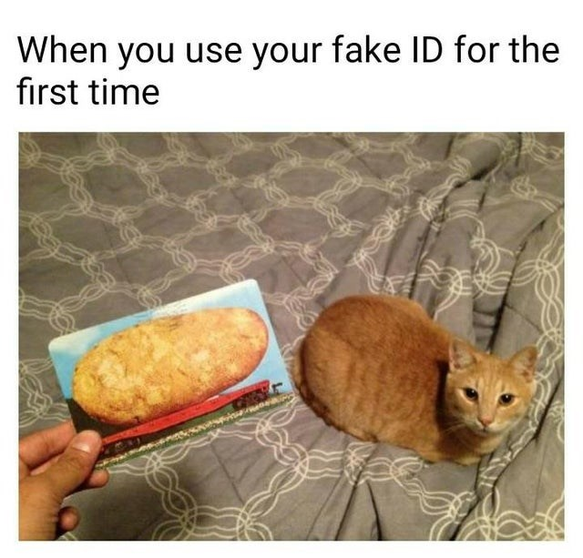 Cat - When you use your fake ID for the first time