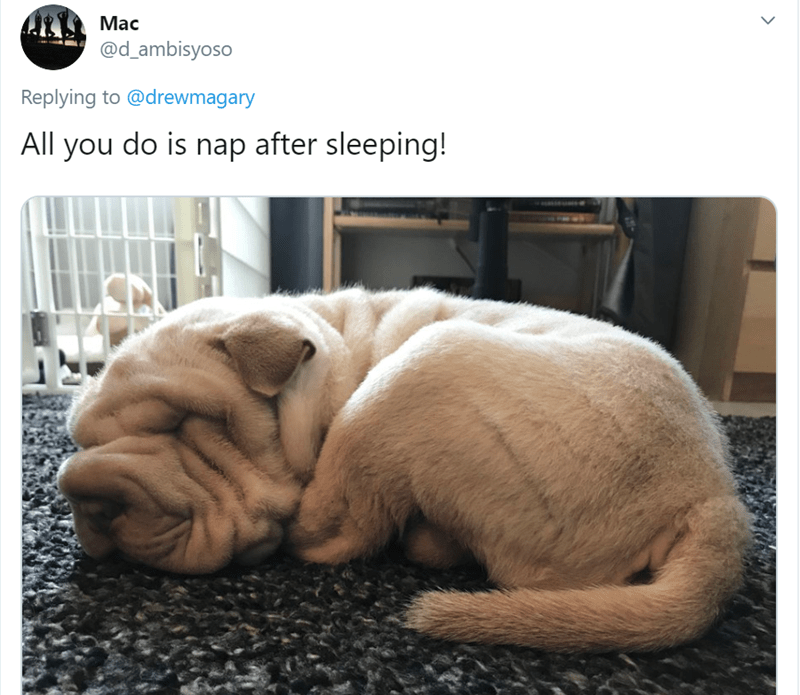 Vertebrate - Мас @d_ambisyoso Replying to @drewmagary All you do is nap after sleeping!