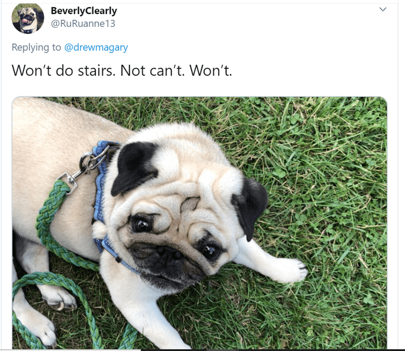 Dog - BeverlyClearly @RuRuanne 13 Replying to @drewmagary Won't do stairs. Not can't. Won't.