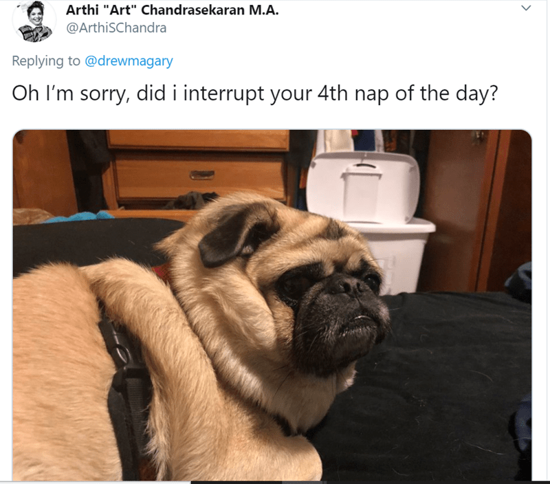 """Pug - Arthi """"Art"""" Chandrasekaran M.A. @ArthiSChandra Replying to @drewmagary Oh I'm sorry, did i interrupt your 4th nap of the day?"""