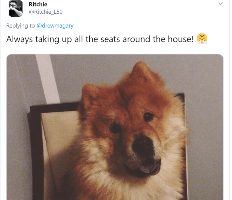 Dog - Ritchie @Ritchie_L50 Replying to @drewmagary Always taking up all the seats around the house!