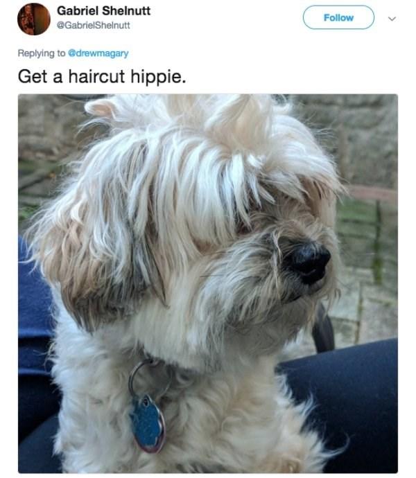 Dog - Gabriel Shelnutt Follow @GabrielShelnutt Replying to @drewmagary Get a haircut hippie.