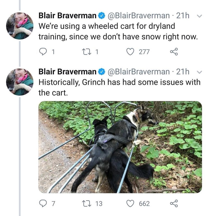 Plant - @BlairBraverman 21h We're using a wheeled cart for dryland training, since we don't have snow right now. Blair Braverman 277 Blair Braverman@BlairBraverman 21h Historically, Grinch has had some issues with the cart. 7 13 662