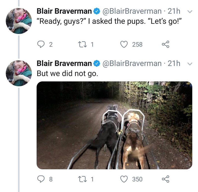 "Text - Blair Braverman@BlairBraverman 21h ""Ready, guys?"" I asked the pups. ""Let's go!"" 258 2 Blair Braverman@BlairBraverman 21h But we did not go. Lo 350 t 1 8 >"