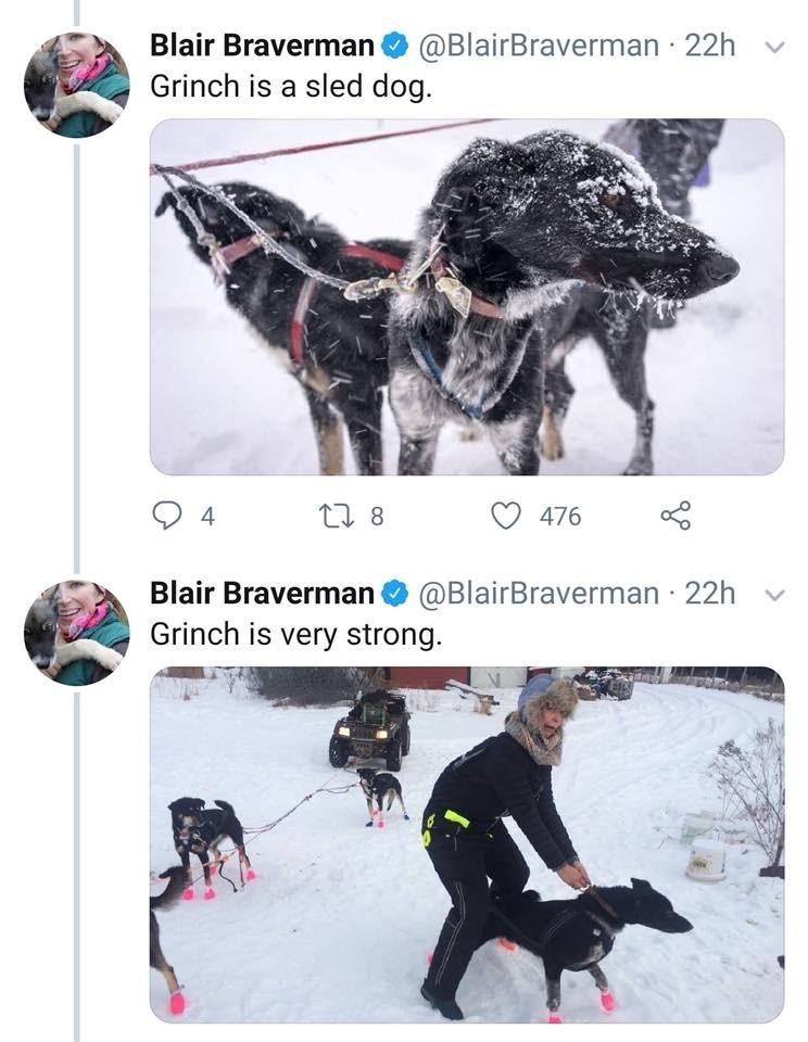Canidae - Blair Braverman @BlairBraverman 22h Grinch is a sled dog. t 8 476 Blair Braverman @BlairBraverman 22h Grinch is very strong.