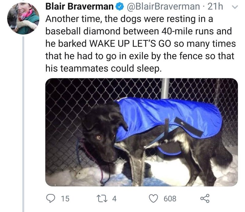 Text - Blair Braverman Another time, the dogs were resting in a @BlairBraverman 21h baseball diamond between 40-mile runs and he barked WAKE UP LET'S GO so many times that he had to go in exile by the fence so that his teammates could sleep. t 4 15 608