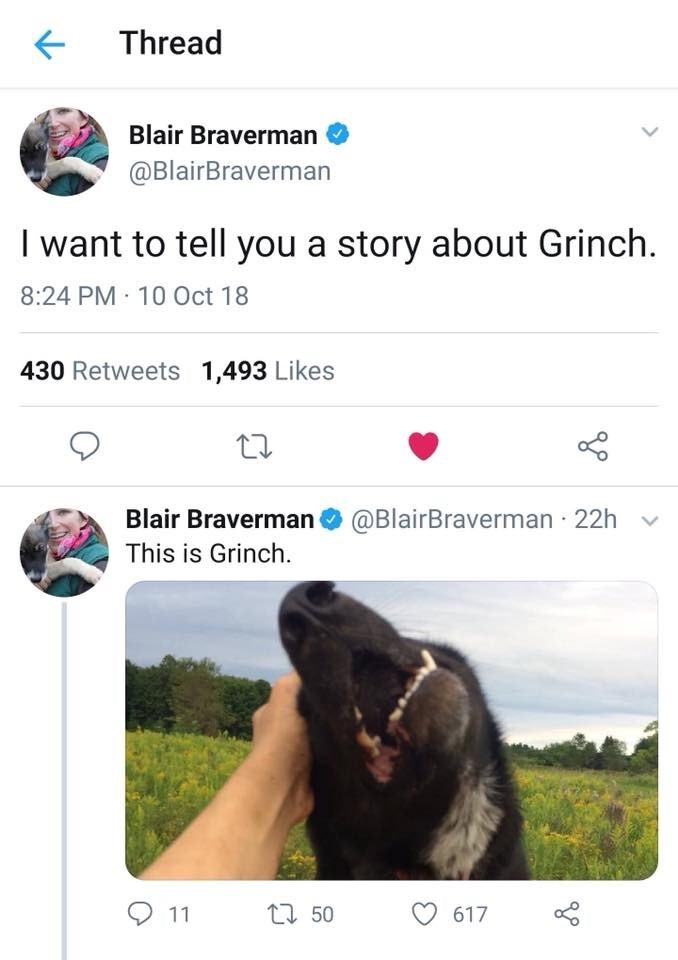 Adaptation - Thread Blair Braverman @BlairBraverman I want to tell you a story about Grinch 8:24 PM 10 0ct 18 430 Retweets 1,493 Likes Blair Braverman@BlairBraverman 22h This is Grinch. 11 t50 617