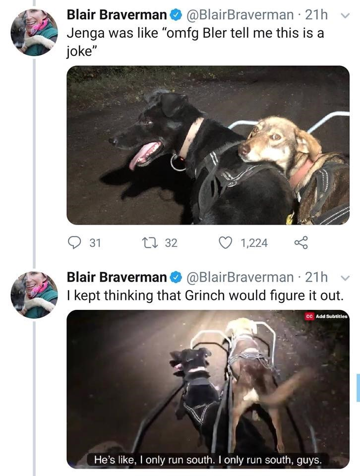 """Photography - Blair Braverman@BlairBraverman 21h Jenga was like """"omfg Bler tell me this is a joke"""" t 32 31 1,224 Blair Braverman @BlairBraverman 21h I kept thinking that Grinch would figure it out. CO Add Subtitles He's like, I only run south. I only run south, guys"""