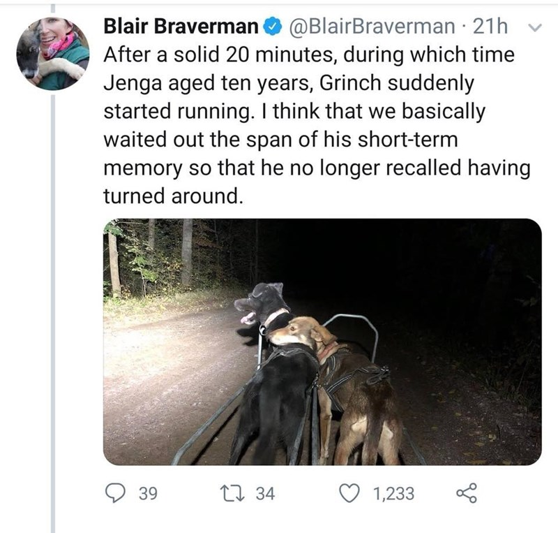 Text - Blair Braverman@BlairBraverman 21h After a solid 20 minutes, during which time Jenga aged ten years, Grinch suddenly started running. I think that we basically waited out the span of his short-term memory so that he no longer recalled having turned around. 34 39 1,233