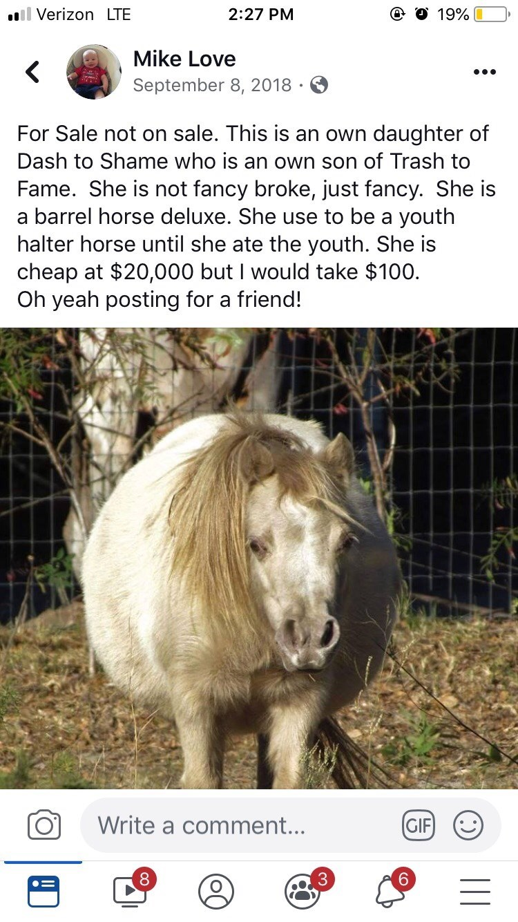 Vertebrate - ll Verizon LTE 2:27 PM 19% Mike Love September 8, 2018 For Sale not on sale. This is an own daughter of Dash to Shame who is an own son of Trash to Fame. She is not fancy broke, just fancy. She is a barrel horse deluxe. She use to be a youth halter horse until she ate the youth. She is cheap at $20,000 but I would take $100. Oh yeah posting for a friend! Write a comment... GIF II