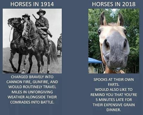 Horse - HORSES IN 1914 HORSES IN 2018 CHARGED BRAVELY INTO SPOOKS AT THEIR OWN CANNON FIRE, GUNFIRE, AND FARTS WOULD ROUTINELY TRAVEL WOULD ALSO LIKE TO MILES IN UNFORGIVING REMIND YOU THAT YOU'RE WEATHER ALONGSIDE THEIR 5 MINUTES LATE FOR COMRADES INTO BATTLE THEIR EXPENSIVE GRAIN DINNER.