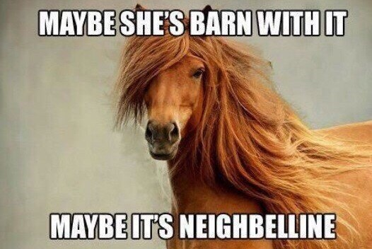 Horse - MAYBESHE'S BARN WITH IT MAYBEITS NEIGHBELLINE