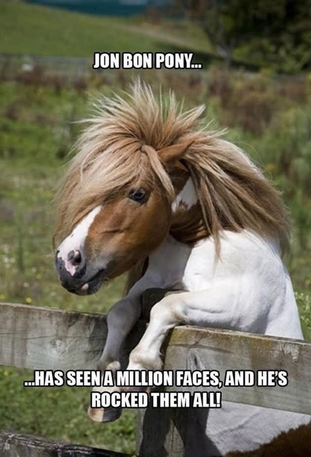 Horse - JON BON PONY.. .HAS SEEN AMILLION FACES,AND HE'S ROCKED THEM ALL!