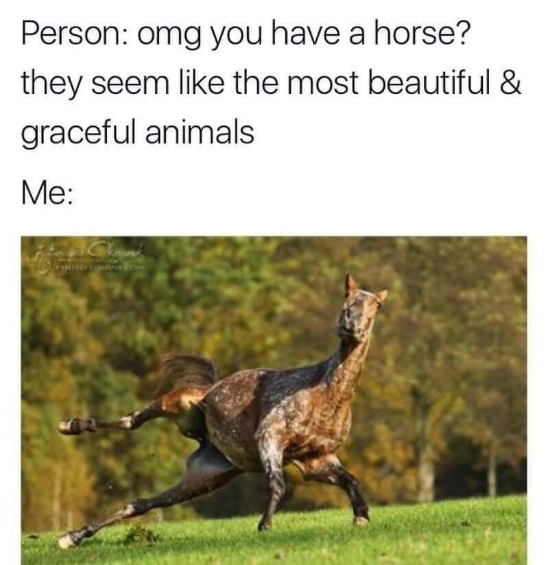 Wildlife - Person: omg you have a horse? they seem like the most beautiful & graceful animals Me: