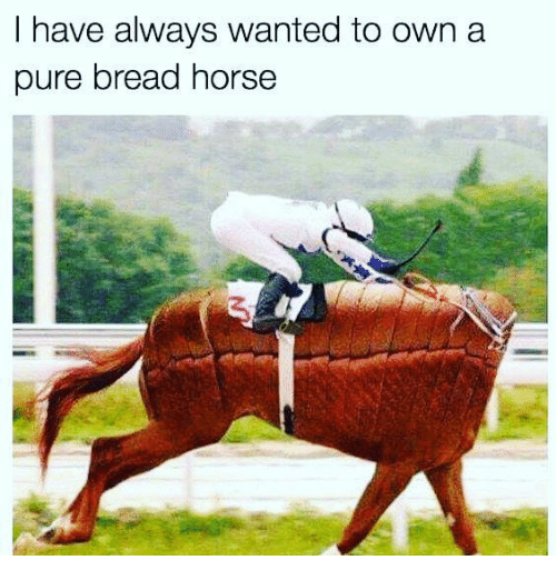 Horse - I have always wanted to own a pure bread horse