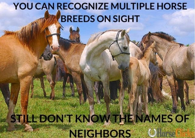 Horse - YOU CAN RECOGNIZE MULTIPLE HORSE BREEDS ON SIGHT STILL DON'T KNOW THE NAMES OF NEIGHBORS OHarse Srek