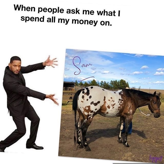 Horse - When people ask me what I spend all my money on.