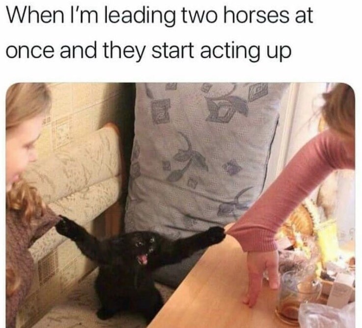 Leg - When I'm leading two horses at once and they start acting up