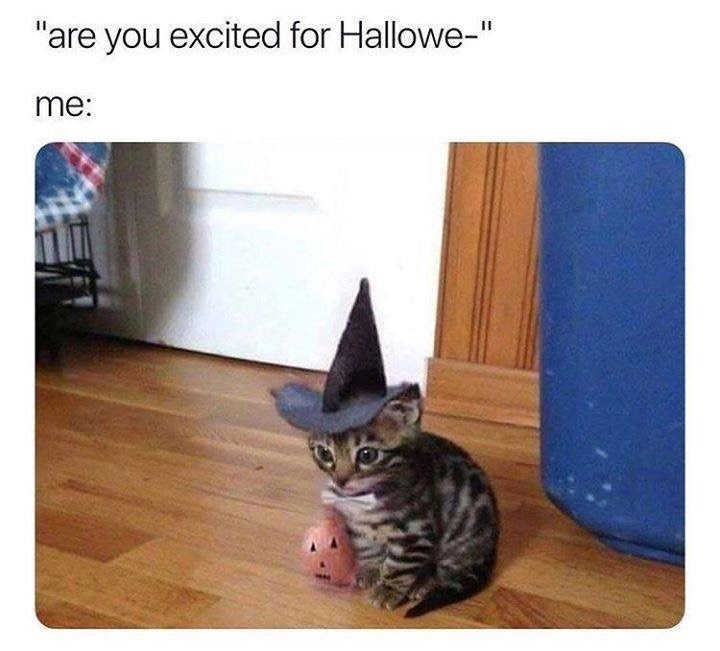 """Cat - are you excited for Hallowe-"""" me:"""