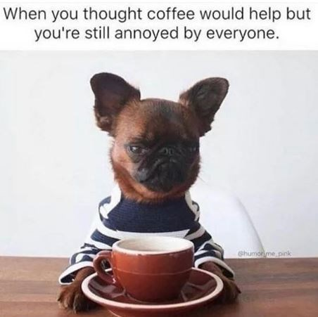 Dog - When you thought coffee would help but you're still annoyed by everyone. humor me pink
