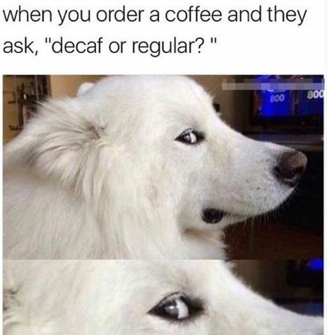 """Dog - when you order a coffee and they ask, """"decaf or regular? 800 800"""