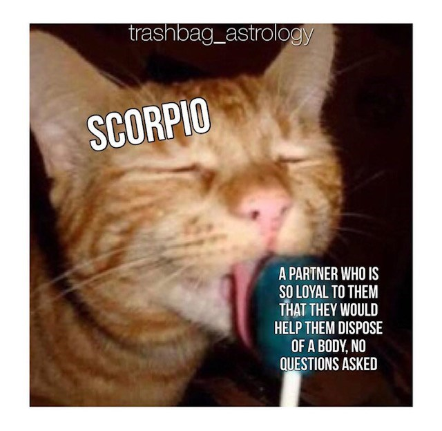 Scorpio Memes In Celebration Of The Lustiest Darkest Sign
