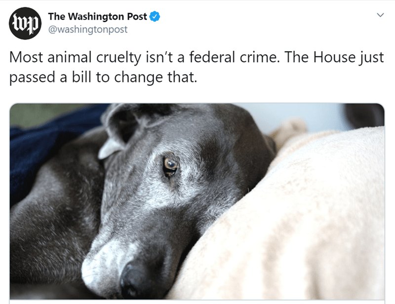 Canidae - The Washington Post @washingtonpost Most animal cruelty isn't a federal crime. The House just passed a bill to change that. >