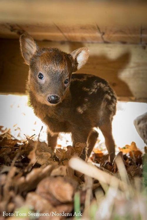 Mammal - Foto:Tom Svensson/Nordens Ark