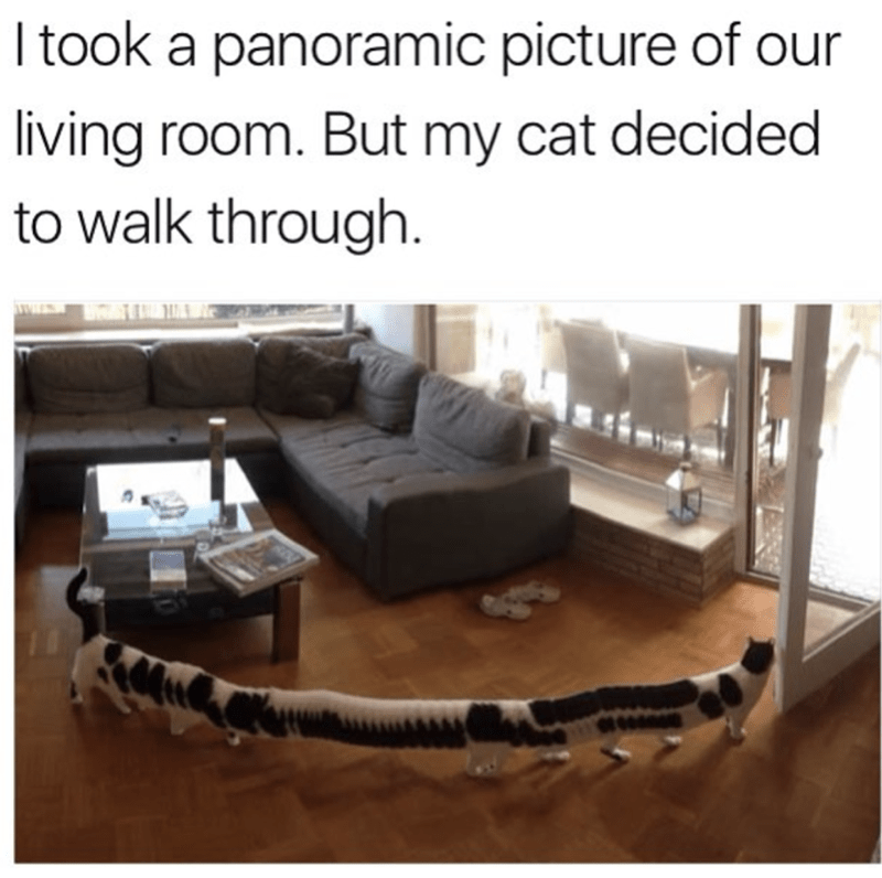 "Funny meme that reads, ""I took a panoramic picture of our living room. But my cat decided to walk through"" above a photo of a stretched-out cat walking through a living room"