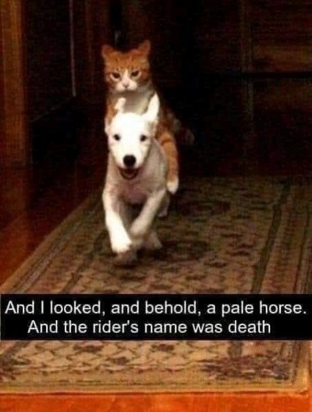 Mammal - And I looked, and behold, a pale horse. And the rider's name was death
