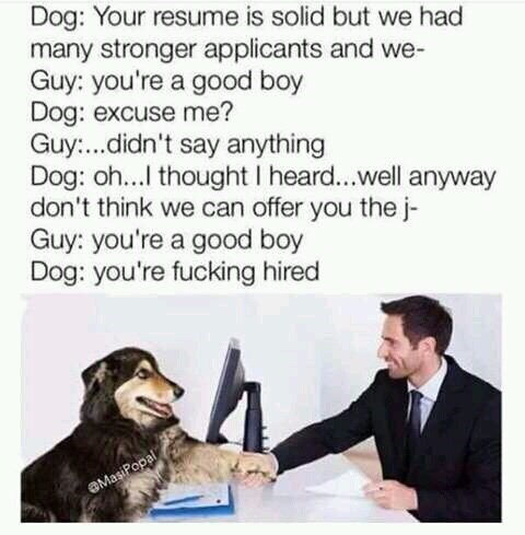 Text - Dog: Your resume is solid but we had many stronger applicants and we- Guy: you're a good boy Dog: excuse me? Guy...didn't say anything Dog: o...I thought I heard...well anyway don't think we can offer you the j- Guy: you're a good boy Dog: you're fucking hired OMasiPopal