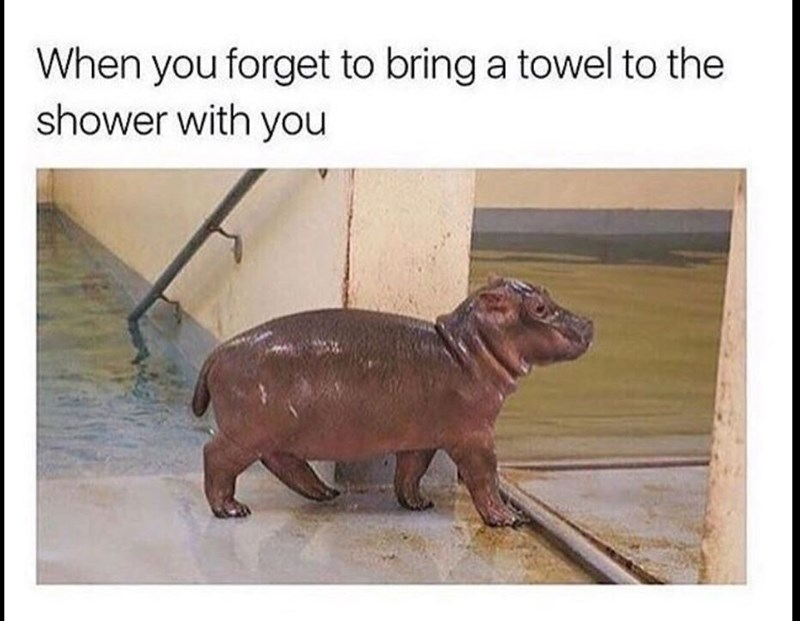 Snout - When you forget to bring a towel to the shower with you
