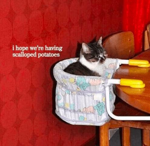 Cat - i hope we're having scalloped potatoes