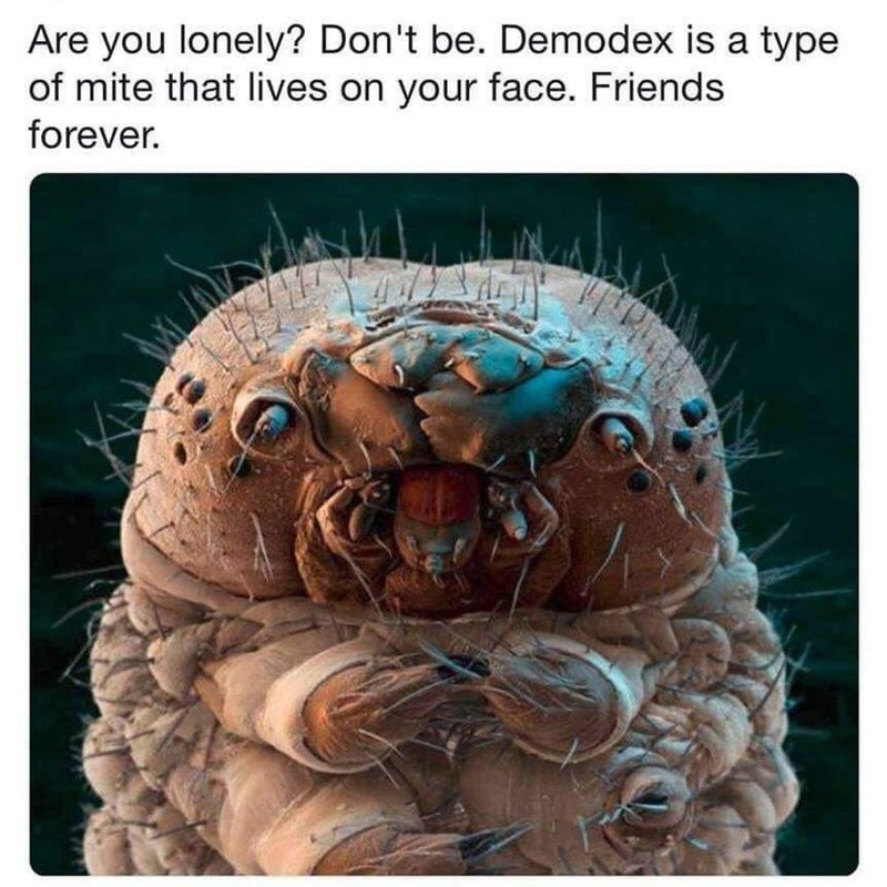 Organism - Are you lonely? Don't be. Demodex is a type of mite that lives on your face. Friends forever.