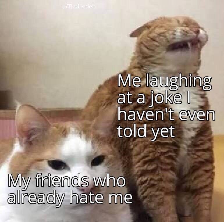 Cat - /TheUseleb Me laughing at a joke haven't even told yet My friends who already hate me