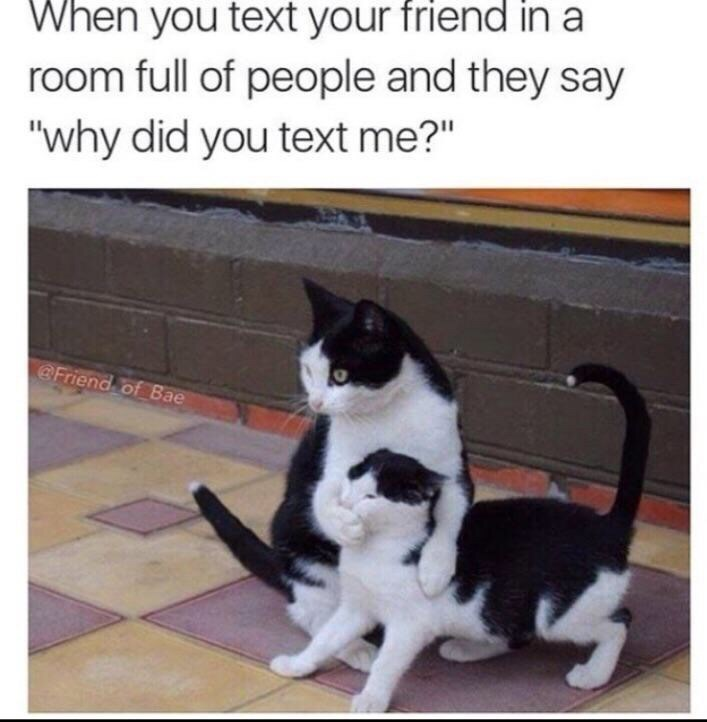 "Cat - When you text your friend in room full of people and they say ""why did you text me?"" @Friend of Bae"