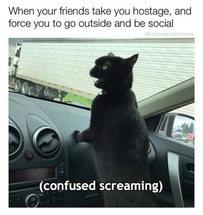 Cat - When your friends take you hostage, and force you to go outside and be social cabbagecatmemes 00Y (confused screaming)