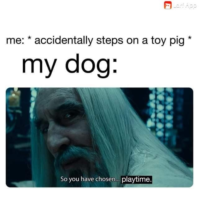 Text - accidentally steps on a toy pig me: my dog: So you have chose... playtime.