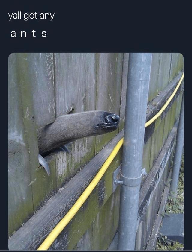 Adaptation - yall got any ants