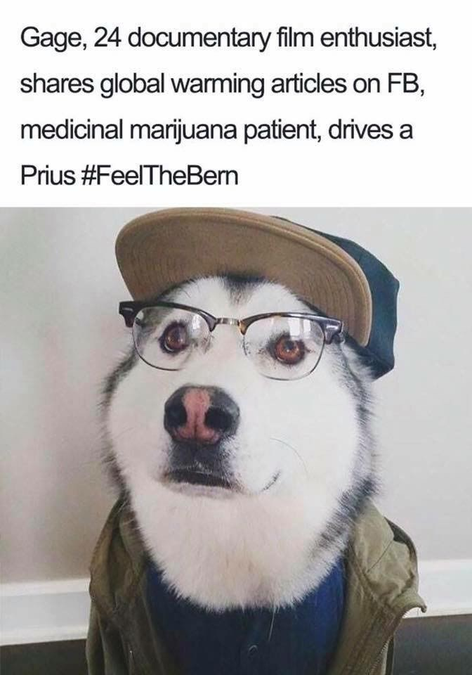Dog - Gage, 24 documentary film enthusiast shares global warming articles on FB medicinal marijuana patient, drives a Prius #FeelTheBern