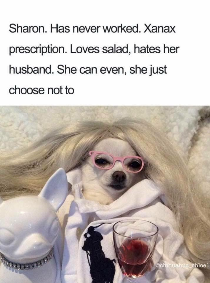 Dog - Sharon. Has never worked. Xanax prescription. Loves salad, hates her husband. She can even, she just choose not to Ochihuahua chloel