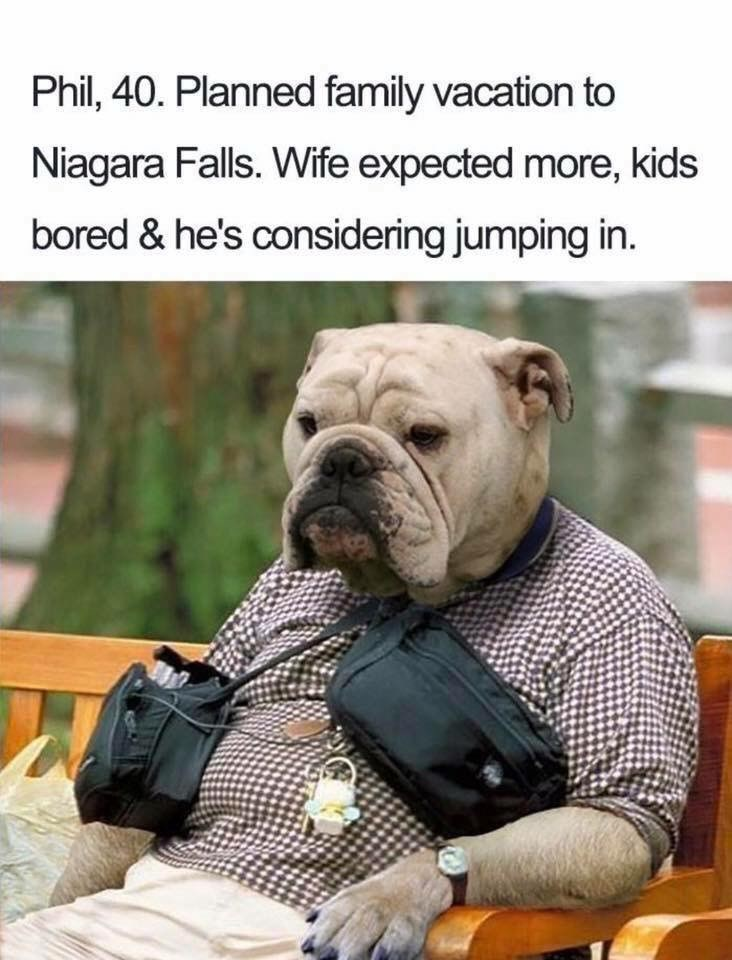 Dog - Phil, 40. Planned family vacation to Niagara Falls. Wife expected more, kids bored & he's considering jumping in.