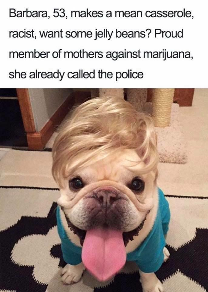 Dog - Barbara, 53, makes a mean casserole, racist, want some jelly beans? Proud member of mothers against marijuana, she already called the police