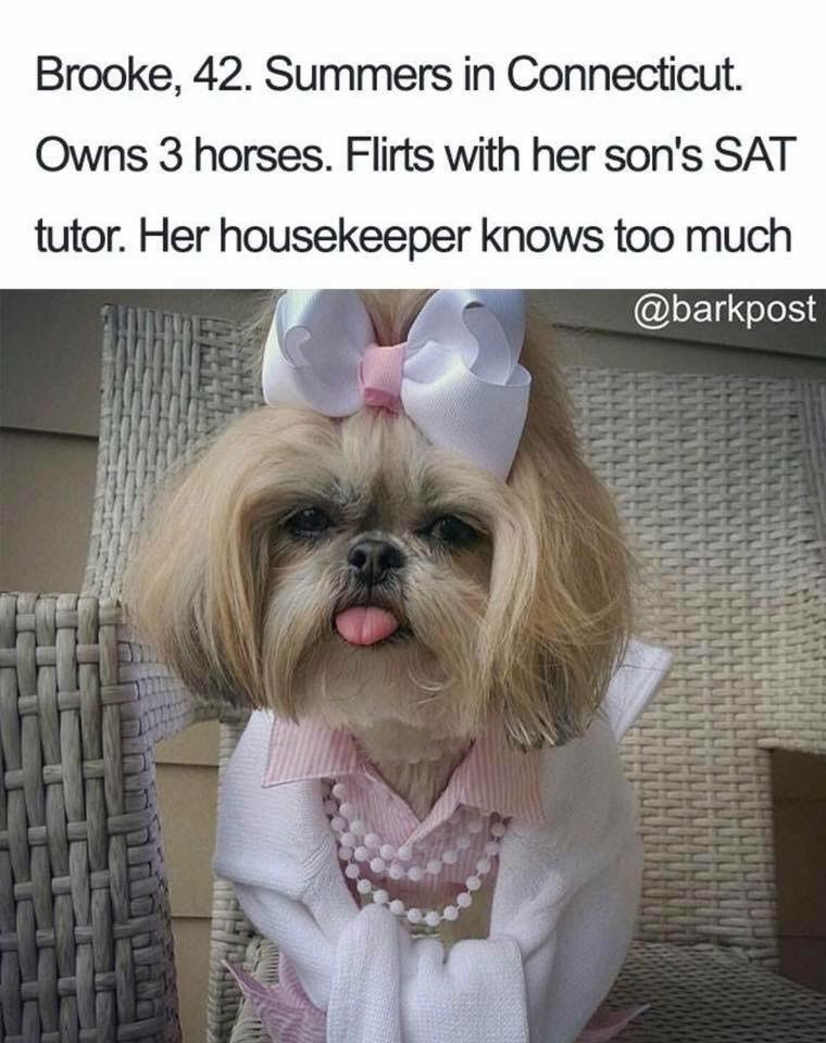 Dog - Brooke, 42. Summers in Connecticut Owns 3 horses. Flirts with her son's SAT tutor. Her housekeeper knows too much @barkpost HH