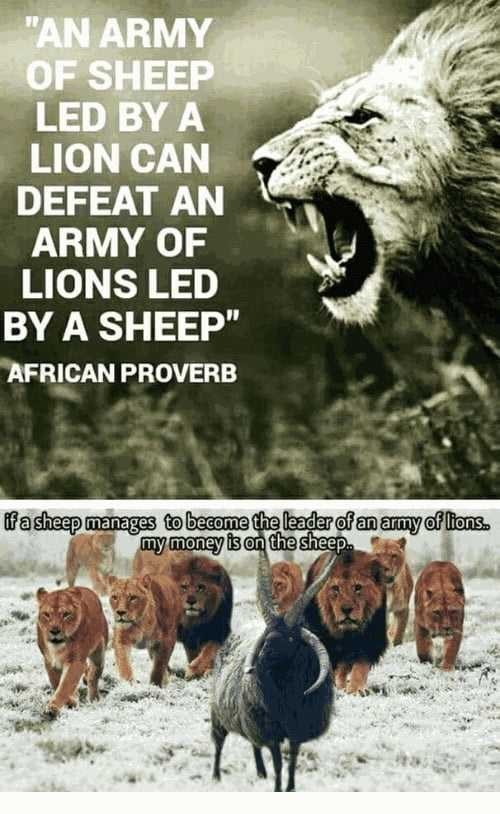 "Wildlife - ""AN ARMY OF SHEEP LED BY A LION CAN DEFEAT AN ARMY OF LIONS LED BY A SHEEP"" AFRICAN PROVERB ifa sheep manages tobecome the leader of an amy of ltons. my money is on the sheep"