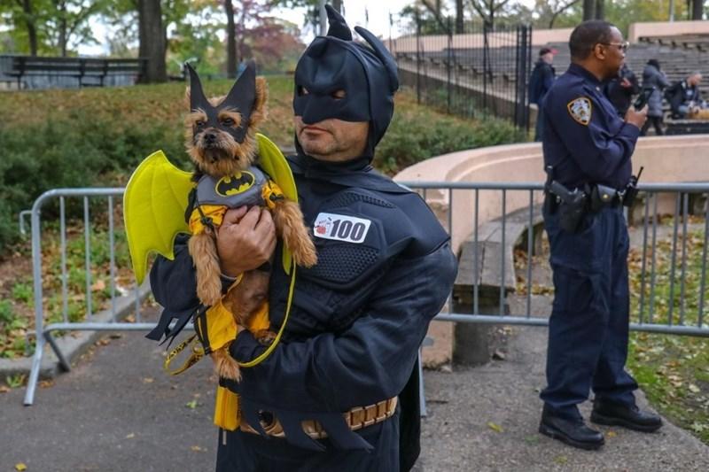 Police dog - 100