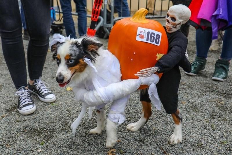 Dog - TA 168