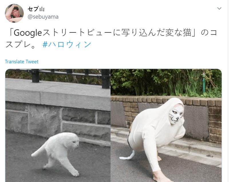 White - セブ山 @sebuyama 「Googleストリートビューに写り込んだ変な猫」のコ スプレ。#ハロウィン Translate Tweet
